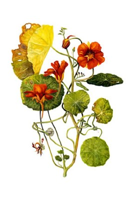 Image Missing: Botanical Illustration IV