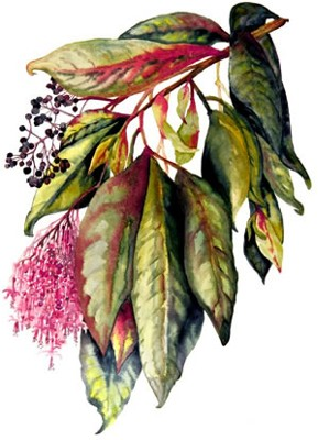 Image Missing: Master Class in Botanical Illustration: Watercolor