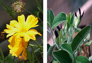 Image Missing: Autumn Herbs for Health, Healing & Celebration!