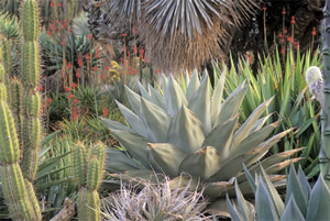 Image Missing: Succulent Plants In The Garden