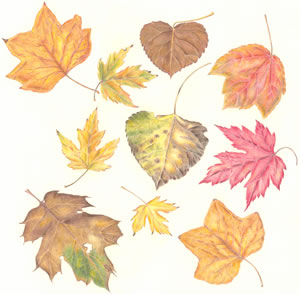 Image Missing: Autumn Leaves in Colored Pencil